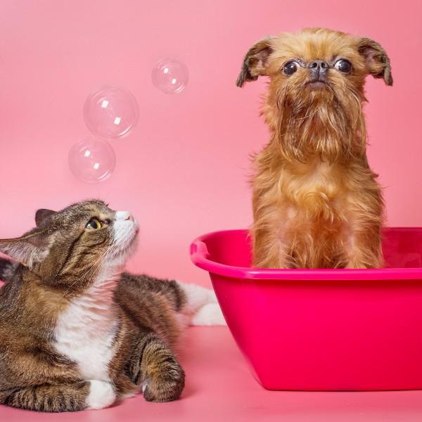O Cantinho dos Pets